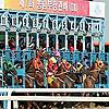 Horse Racing in Korea   Korea Racing Blog