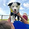 Zak George's Dog Training rEvolution | Youtube