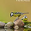 Alan Heeley Wildlife Photography
