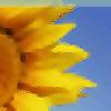 Agronomy for Sustainable Development blog