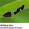 Wild About Ants