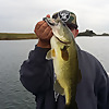 Bass Monkey Fishing
