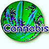 CannabisWorld.biz