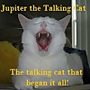 Jupiter the Talking Cat
