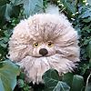 LucyRavenscar   Crochet Creatures