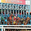 Horse Racing in Korea | Korea Racing Blog