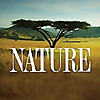 Nature on PBS | Youtube