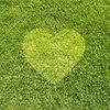 Lawn America   Lawn Care & Landscape Maintenance