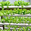 Hydroponics DIY Projects - Gardening Solutions For The Home