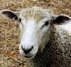 Woolly Mammoth Woolens