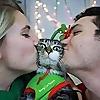 The Meow Blog