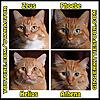 Ginger Kitties Four