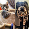 Shadow Cat's Shenanigans | Cute Kittens to Funny, Adorable Cats