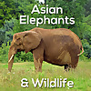 Asian Elephants & Wildlife