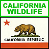 California Wildlife
