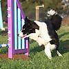 Hybrid Dog Training