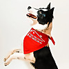Take Me Home Pet Rescue | Richardson, TX