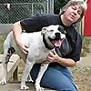 AmericanBulldogSavvy - Blog