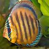 FISH AQUARIUM GUIDE