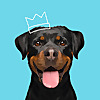 Petplan Pet Insurance - North America