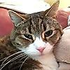 Miri's House Cat & Kitten Rescue