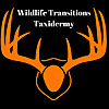 Wildlife Transitions Taxidermy