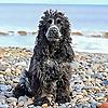 woofwagwalk.co.uk A UK Dog Friendly Lifestyle Blog