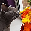 MasterPlan Cats Blog | As every cat owner knows, nobody owns a cat!