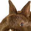 Chocolate Rabbit Graphics