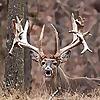 Oak Creek Whitetail Ranch   Missouri Whitetail Deer Hunting Blog