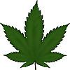 Cannabis Info Point