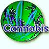 CannabisWorld.biz