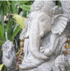 Jyotish and Yoga News