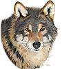 Cathleen Lengyel Wildlife Art