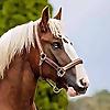Horsey Hooves