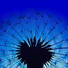 Dandelion Seed Daydreams