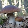 The wonderful world of mycology