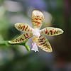 Orchidaholic