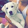 SuperMax The Labrador