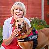 Evie Fox Red Labrador